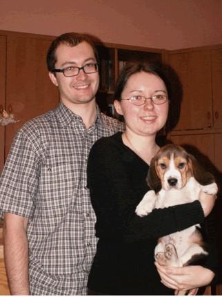 beagle hodowla
