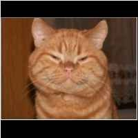 Beagle I Westy Domowa Hodowla Beta Plus O Nas I Hodowli Beta Plus