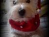Lola (Celinka)