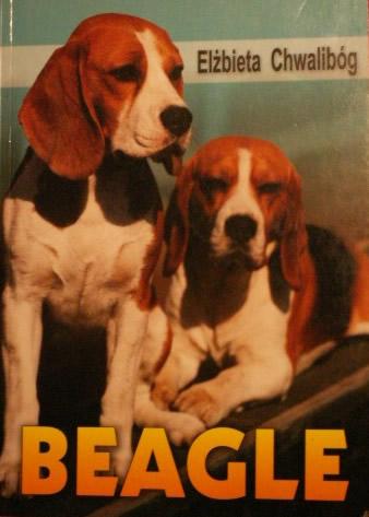 hodowla beagle